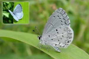 azure monica