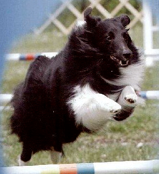 wissa dog